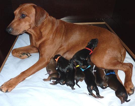 18.05.2014, stolze Mama Onnie mit ihren Welpen kurz nach der Geburt !!