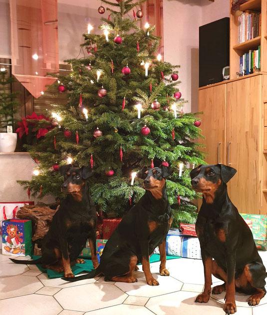 24.12.2018, Geeva, Sunny und Maggie wünschen FROHE WEIHNACHT !!
