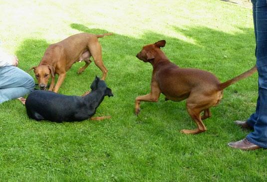 """Mama Onnie, Sunny und Bonüs beim Spielen! Alle hatten einen """"riesen Spaß"""" ;-))"""