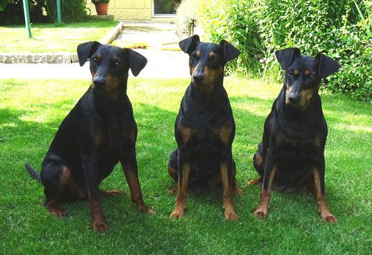 22.06.2020, Maggie, Sunny und Geeva fühlen sich im Garten sichtlich wohl ;-))