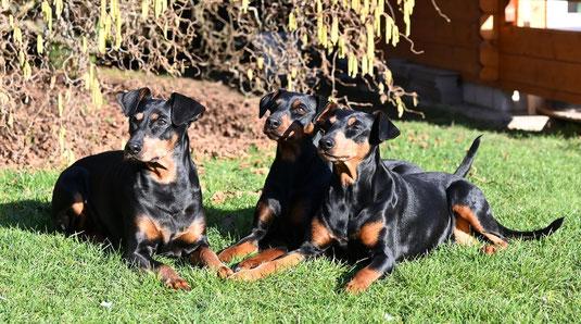 März 2021, Geeva, Maggie und Sunny genießen die Sonne ;-))