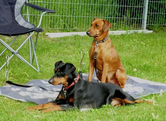 """16.06.2013, Geeva und Onnie warten auf ihren """"großen Auftritt""""  ;-))"""