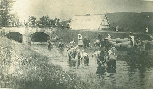 1917 - Schafe waschen in der Heller