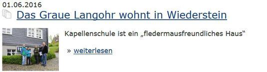 Das Graue Langohr wohnt in Wiederstein
