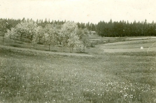 """Obstgarten """"In der Dell"""" - 1961 -"""