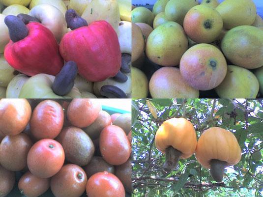Imagenes de frutas producidas por los campesinos de la vereda San Pablo   de Polonuevo Atlántico, asociados de la cooperativa agropecuaria San Pablo COOAGROSAN