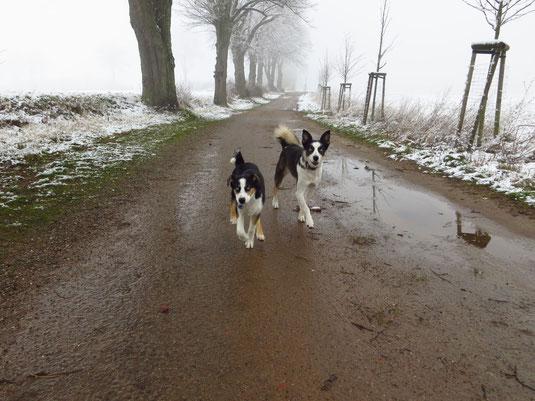 Ayla und Sitka