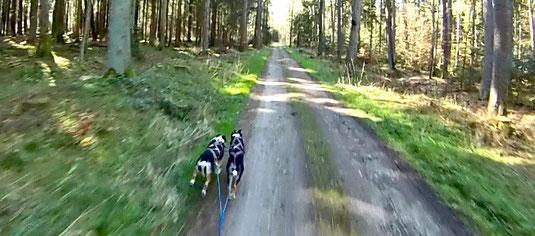 Aylas erste Scooting-Tour (5,6 km) mit Sitka im Gespann