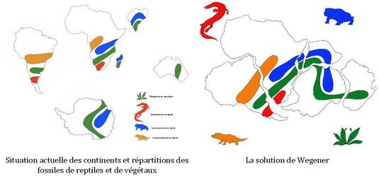 La répartition de certaines faunes et flores. Les fossiles de Mesosaurus ne sont connus que dans  des parties sud de l'Amérique du Sud et de  l'Afrique. Cette répartition géographique se comprend mieux  si l'on admet que ces deux continents étaient reunis