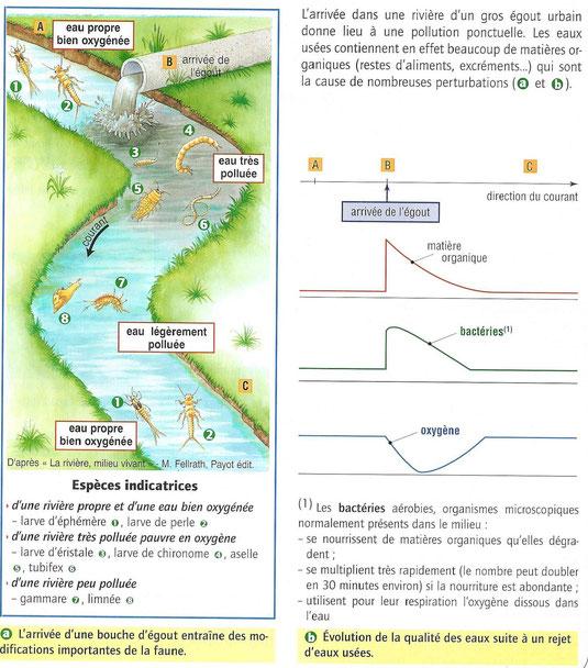 Etude de différentes caractéristiques du milieu et leurs modifications causées par les activités humaines.