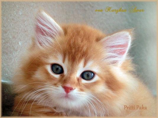 Pritti Paka bedeutet: Schöne Katze