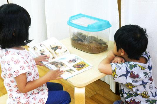 幼稚園児がモンテッソーリの活動で、カブトムシの観察活動をしています。