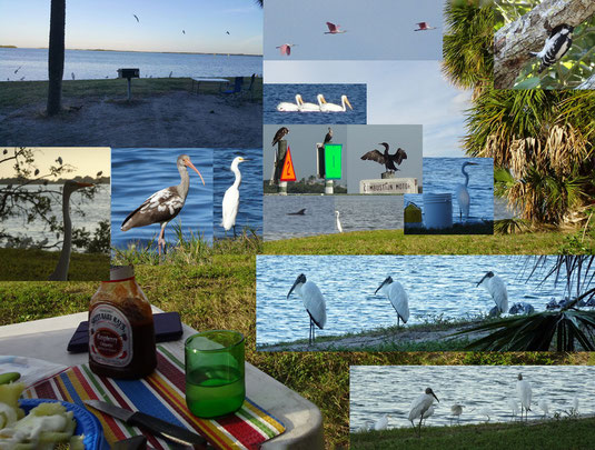 wie im Kino: von Delphin bis Seeadler - alle kamen sie an unserer Site vorbei. Fort de Soto County Park, FL
