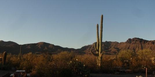 Tucson, Gilbert Ray Campground