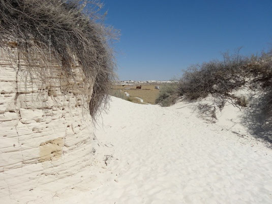 White Sands, Dune Life Nature Trail