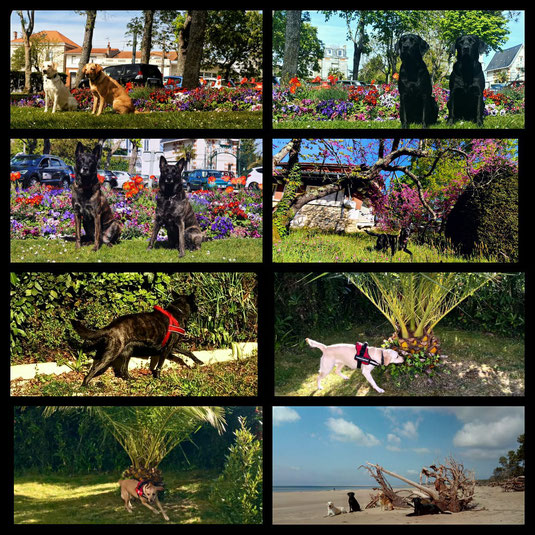 Asiatischer Laubholzbockkäfer Spürhunde; Tarlo asiatico cani; Capricorne asiatique