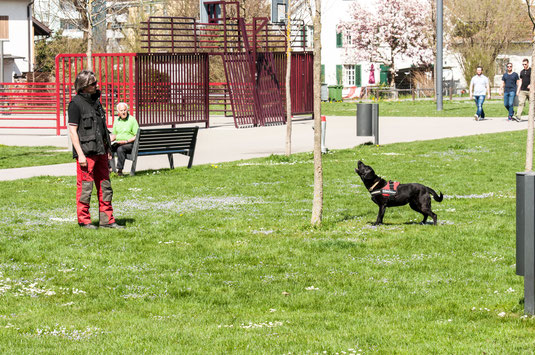 ALB Spürhunde Maisha bei einer Anzeige. Foto: Marion Hofer, Verlag Fred und Otto