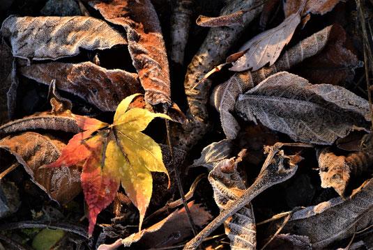 12/2 奥州市の妻の実家にて。朝7時頃。裏山へのフクとの散歩道で見つけた秋と冬。