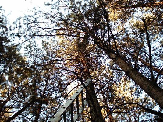 Kann jemand was im Baum erkennen?