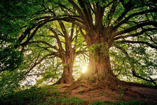 Verwurzelung, Energiearbeit, Erdung, Baum