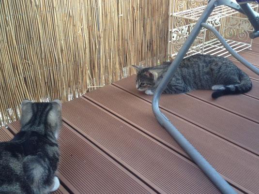 Die beiden Katzenmädels genießen die Sonnenterrasse.