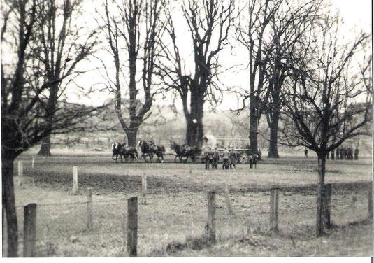 Pferdemusterung auf dem Bruch durch die Heeresverwaltung 1939