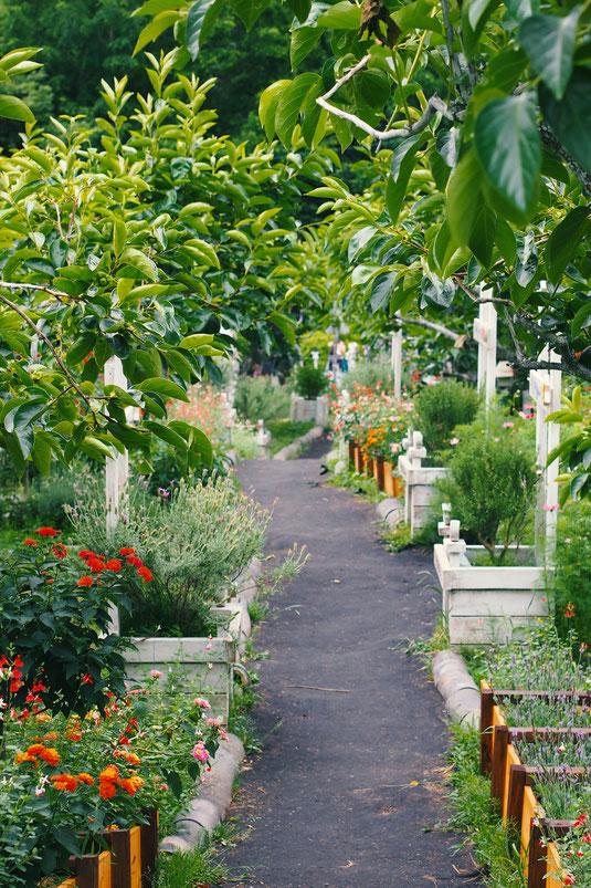 Blumen Pflanzen Kräuter Bäumchen Baum Kübel