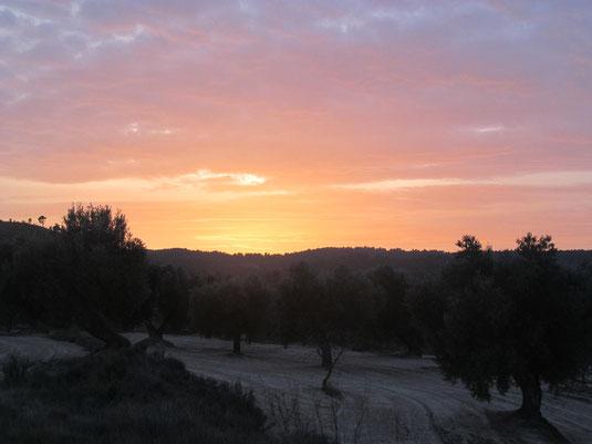 Couché de soleil sur les oliveraies