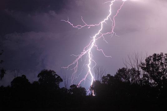 Raio Staccato, visto em Warwick, Austrália. Foto de Michael Bath.