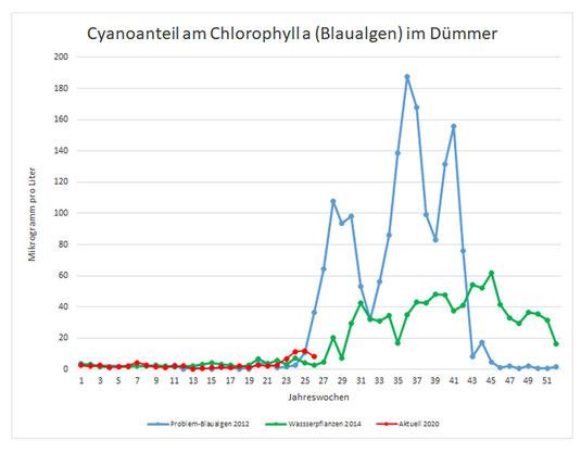 Die Messergebnisse aus dem Dümmer-Museum zeigen, dass Blaualgen sind in diesem Jahr im Dümmer bislang noch kein Thema sind.