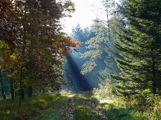 Der Trocheler Forst ist ein Kleinod unter den Wäldern der Region
