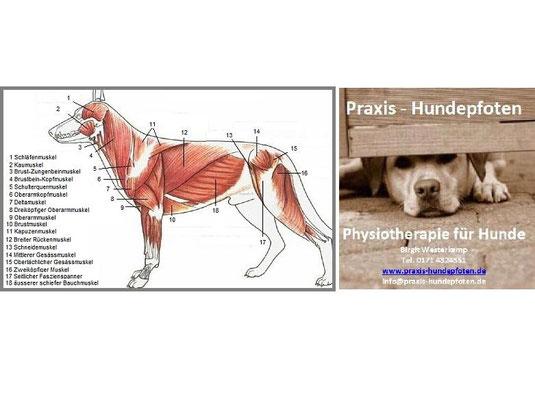 Hunde-Massage-Workshop - Hundeschule am Schlosspark