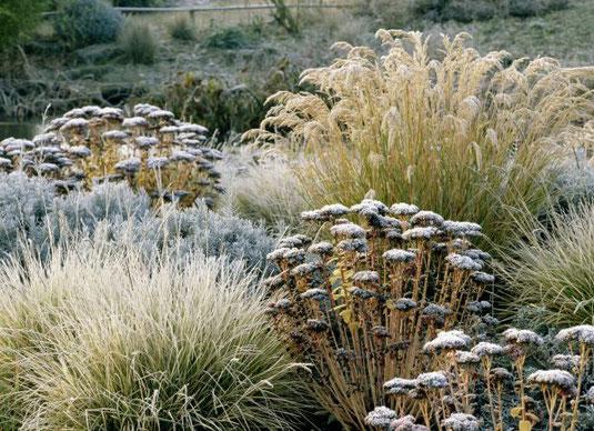 Gräser gehören zu den echten Konstanten des Gartens. Sie imponieren bis in den Winter hinein und geben Beeten auch bei Minusgraden noch Struktur. (Foto: BGL.)