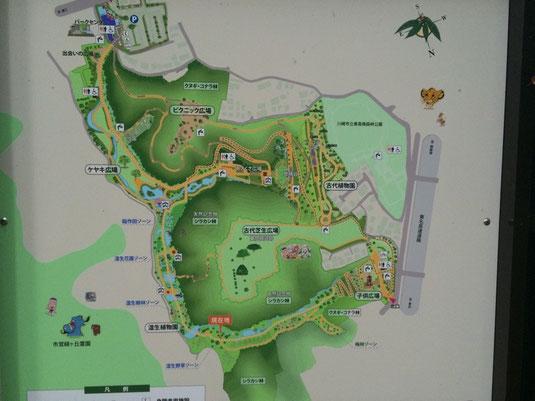 東高根森林公園地図(クリックして拡大)