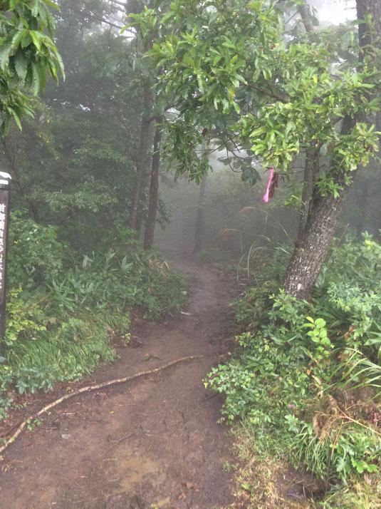 路面はマッディ、行先は霧