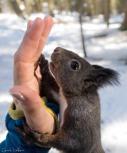 Eichhörnchen High Five :-)