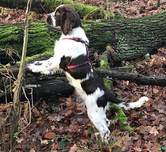 Reni im Wald 4 Monate alt