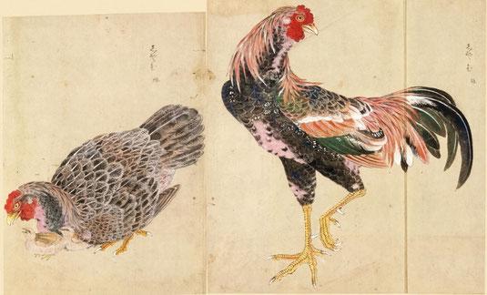 志やむ 禽譜 宮城県図書館所蔵