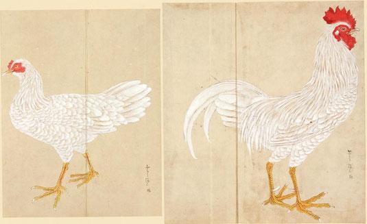 とうまる 禽譜 宮城県図書館所蔵