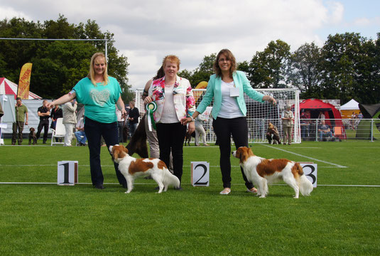 Jachthondenshow Nederland - 15 juni 2014