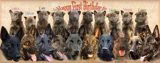 1 februari 2016 Hieper de hoo voor de L-puppies. Zij zijn vandaag 1 jaar ...