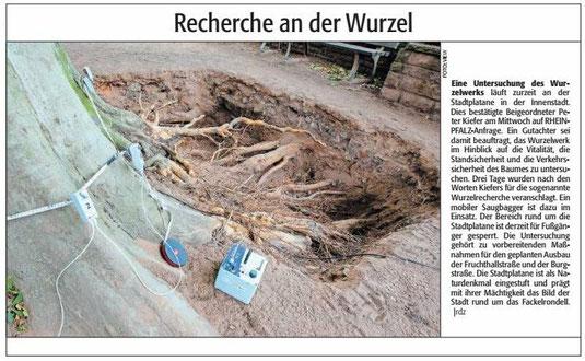 Verein für Baukultur und Stadtgestaltung Kaiserslautern e. V. - Innenstadt_Stadtplatane