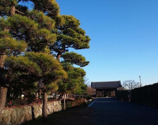 12月31日(2014) 松の木と山門:東郷寺(府中市)にて12月27日に撮影