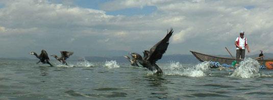 Pêcheurs aux cormorans sur le lac Erhai