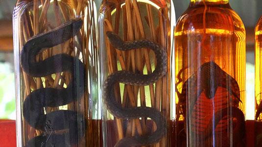 Bouteilles de Lao lao (whisky national) arôme serpent ou scorpion au choix... A consommer avec modération!