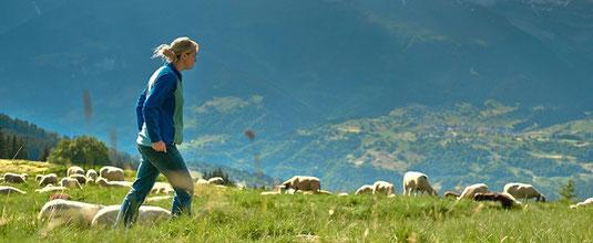 Bild der Berghilfe mit Helferin und Schafen