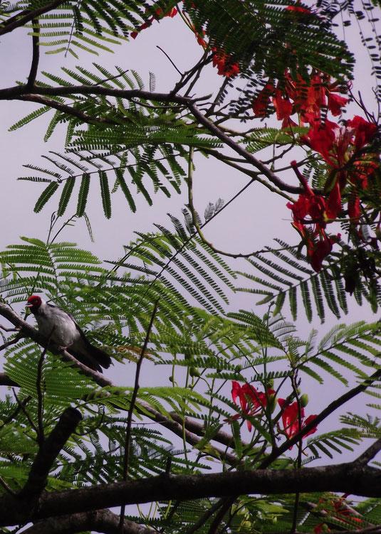 bird, Villa Tunari, Amazon, Bolivia