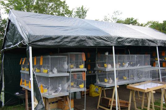 mehr als 50 Sticken (!) präsentierten sich zur Tierbesprechung