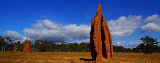 Termiten- Kunstwerk in Cape York