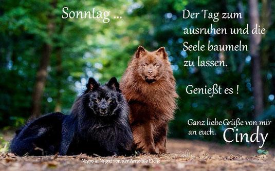 15.11.2020 Großspitz Rüden Nugat & Negro von der Arnold's Eiche